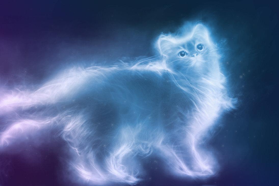 ¿A Dónde va el alma de los animales cuando mueren?